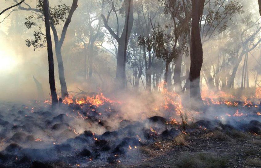 incendios-forestales-efecto-medioambiental