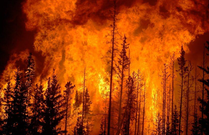 investigacion-incendios-forestales