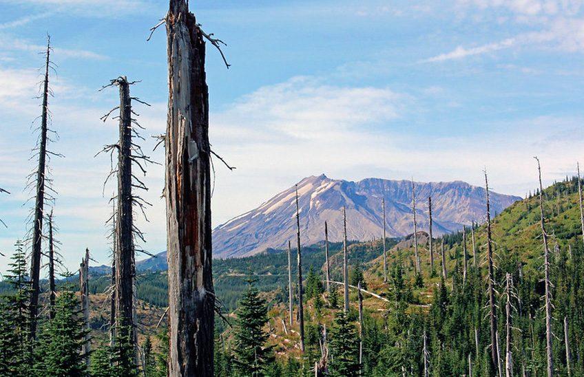 repoblacion-forestal